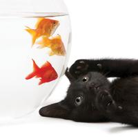 Redfish System Management » ADMIN Magazine